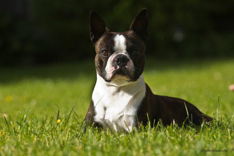 male rasy psow