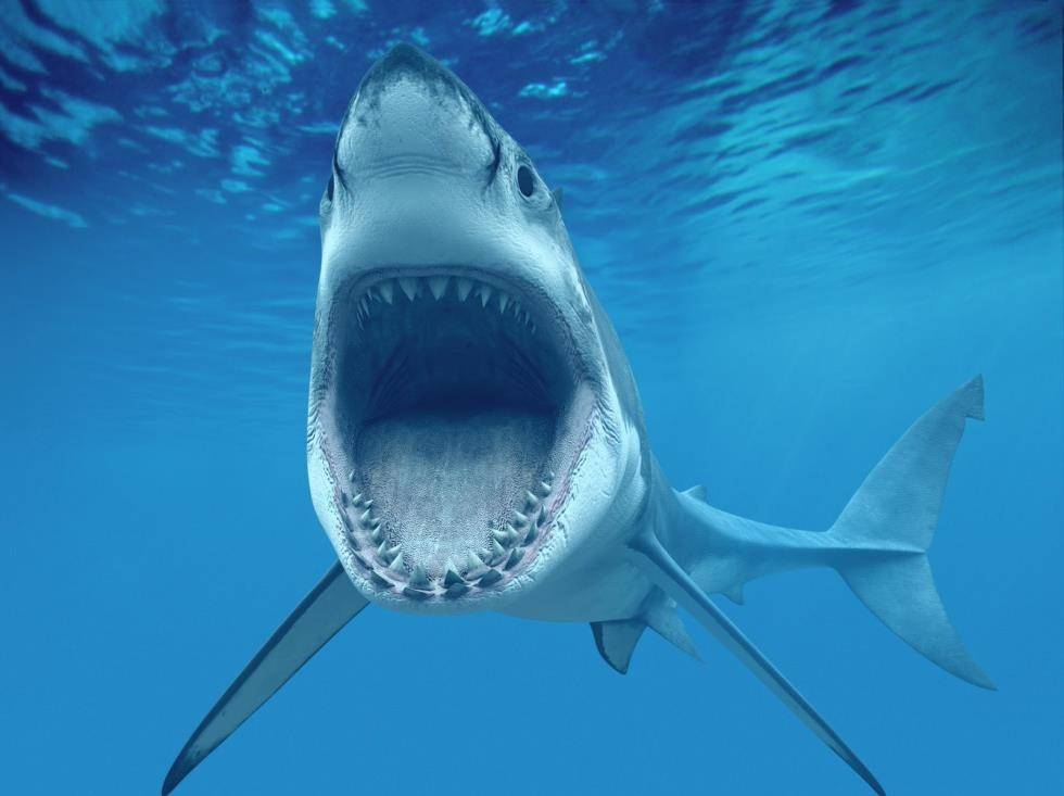 ryklys neturi varpos aukščiausia varpa