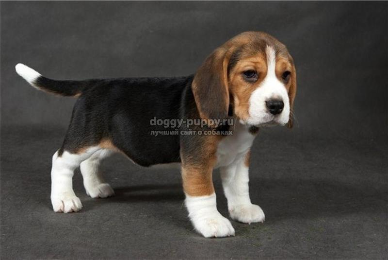 с порода собак с фотографиями и названиями