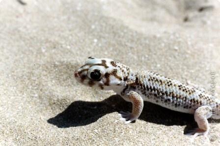 La lagartija se llama de manera diferente. Los lagartos más grandes ...