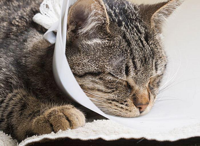 chlpaté mačička amatér