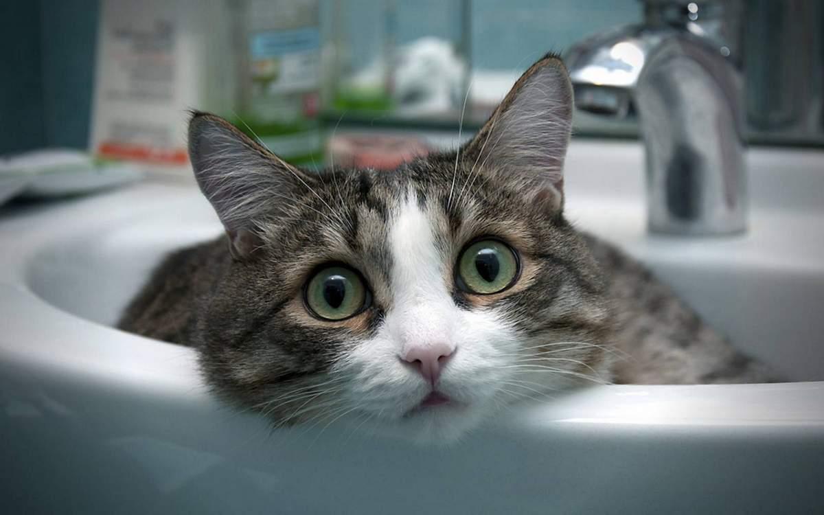 Kung Paano Magamit Ang Cat Sa Toilet At Laging Posible Mangkok Dapat Mong Agad Na Maghanda Para Katotohanan Pusa Ay Maaaring Isang Punto Hindi Nasisiyahan Tulad Ng Mataas Pitched Lugar