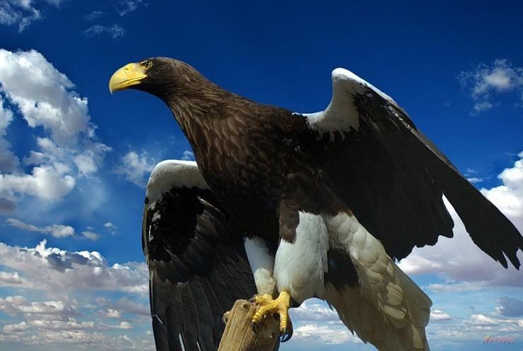 MILFs s veľkými vtáky