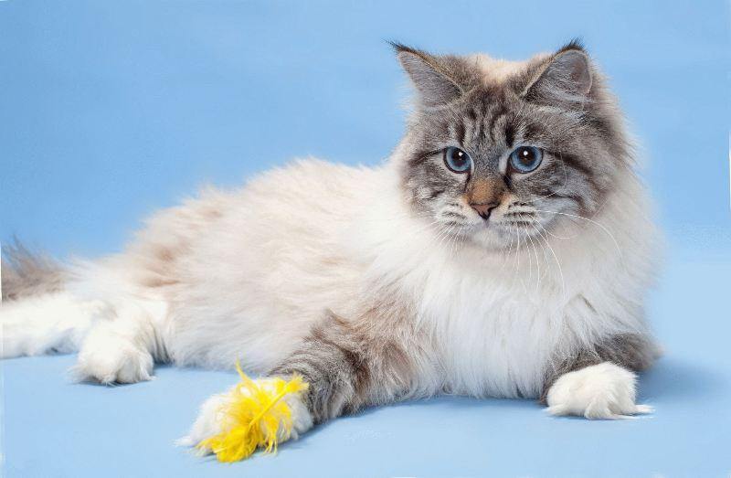 Perfektné blondína mačička