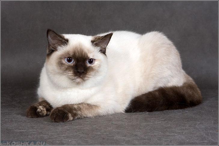 pekná striekať mačička