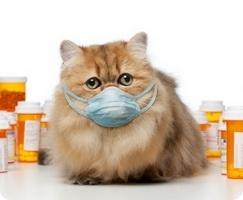 Кот чихает чем лечить насморк у домашнего любимца