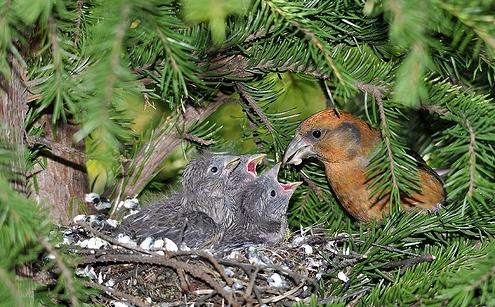 Сова птица. Образ жизни и среда обитания совы