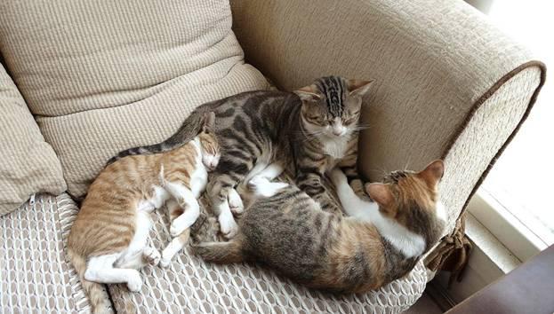 Čo robí mačička striekať