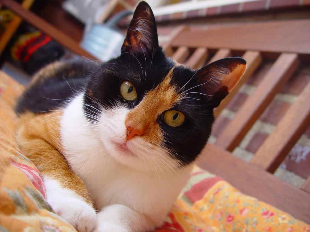 zrelé mačička spodná bielizeň