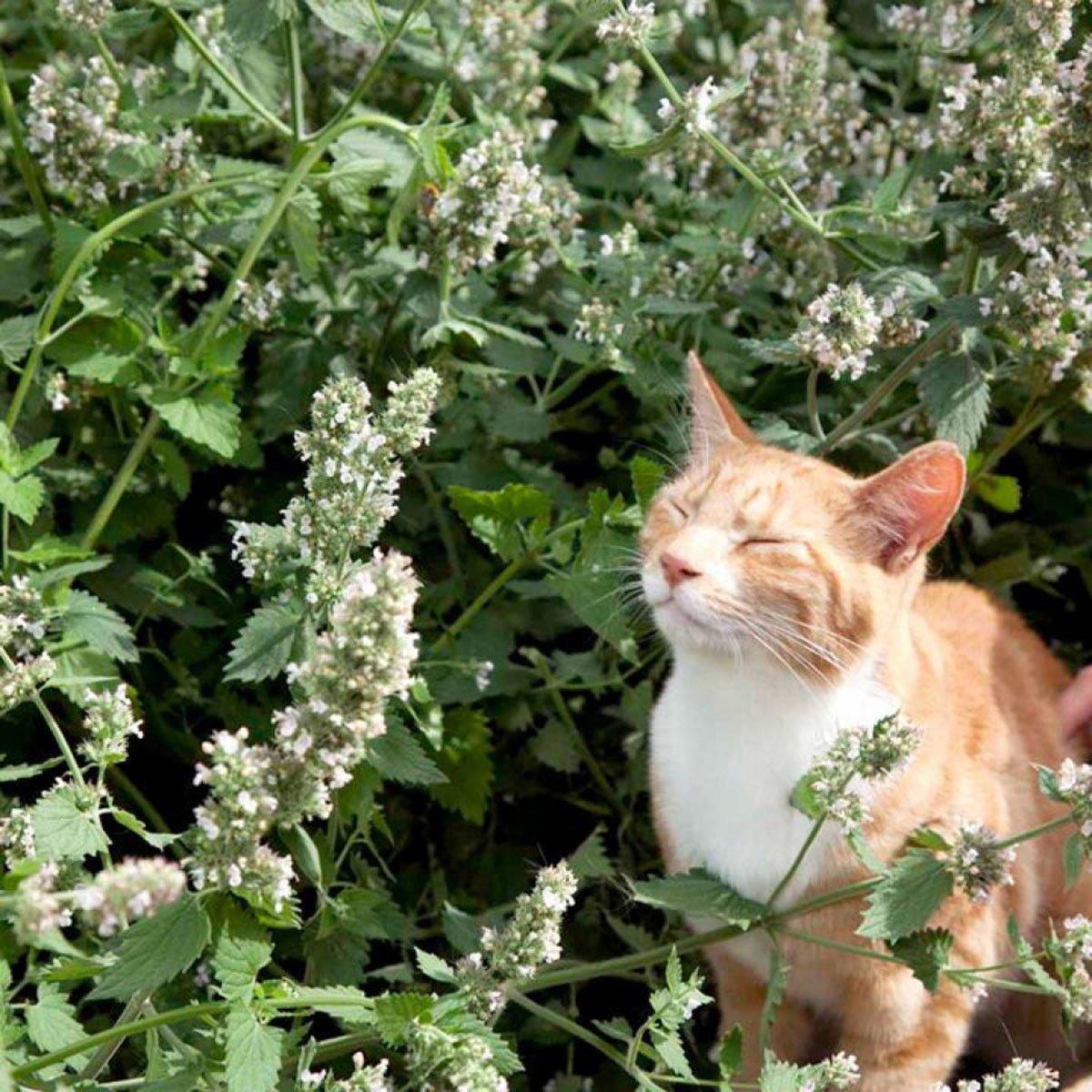 Obrázky ženy mačička
