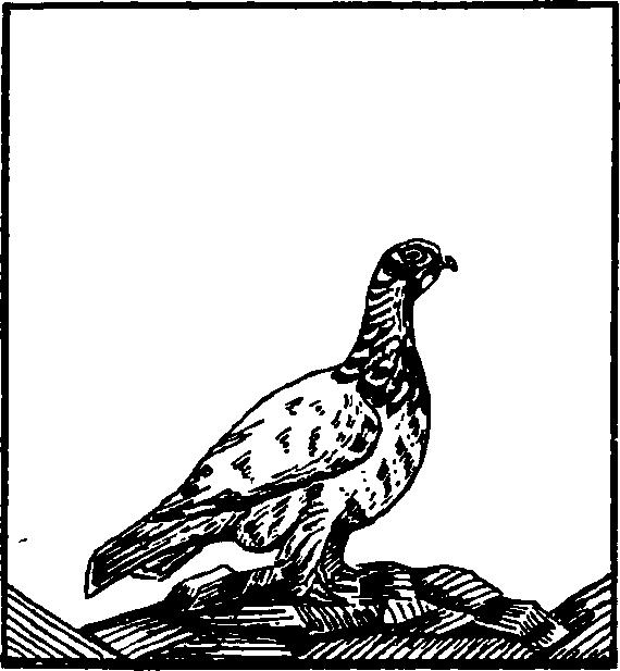 Veľké pery sania vtáka