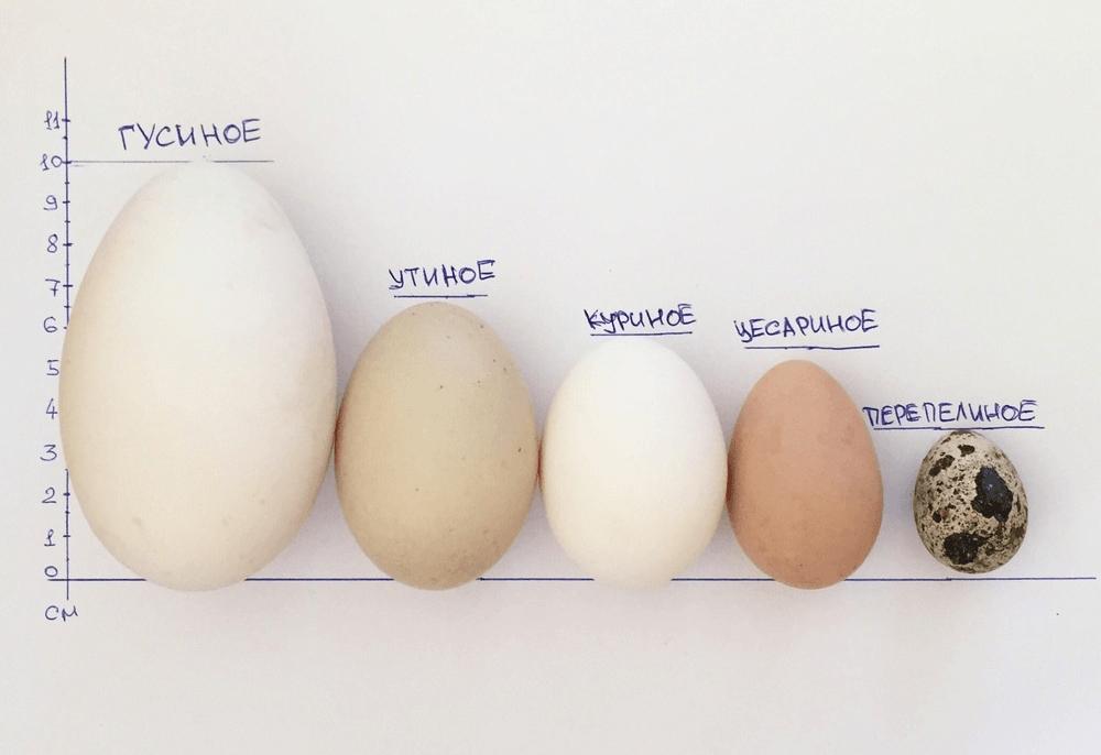 Jak Gotować Jajka Gotowane W Kuchence Mikrofalowej Jak Gotować