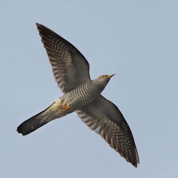 Dlhé vtáky