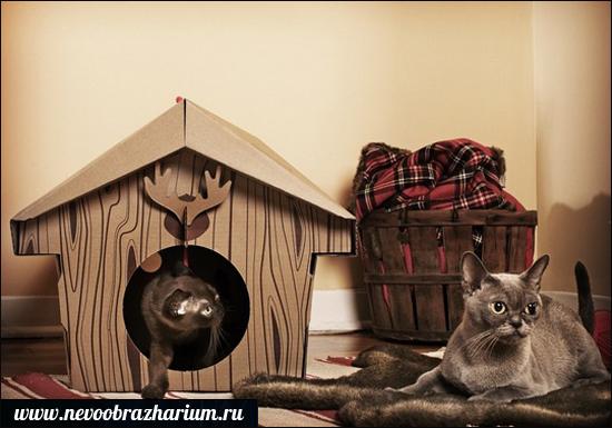 amatér chlpatý mačička