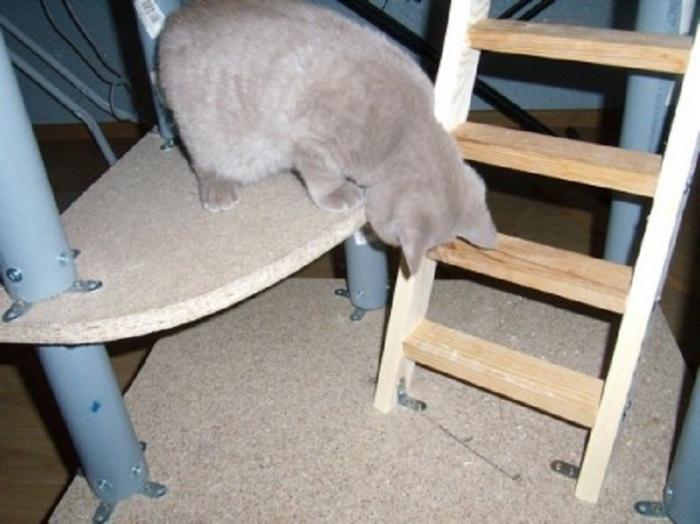 Hrubé kohúty v tesnej mačička