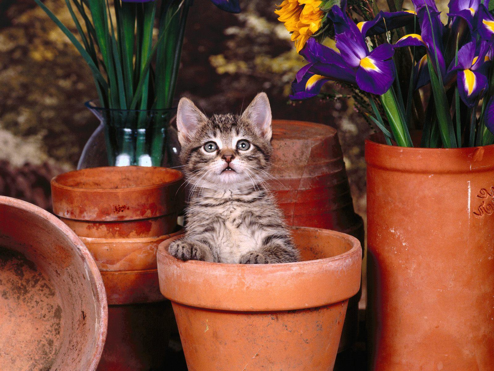 mokré divoké mačička