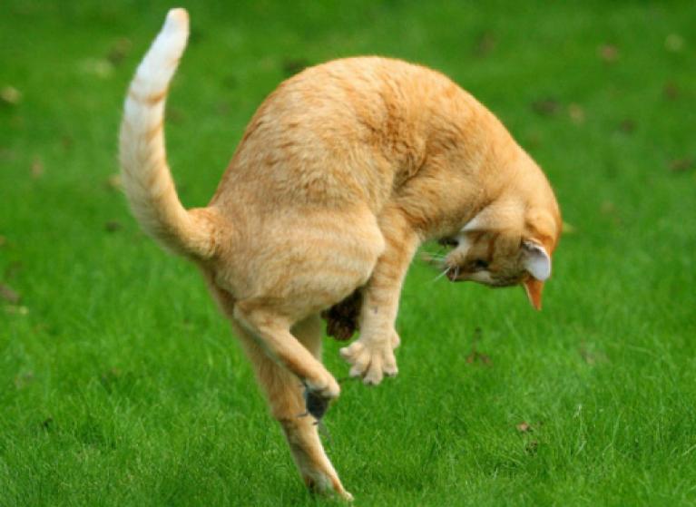 Кошка ловит собаку