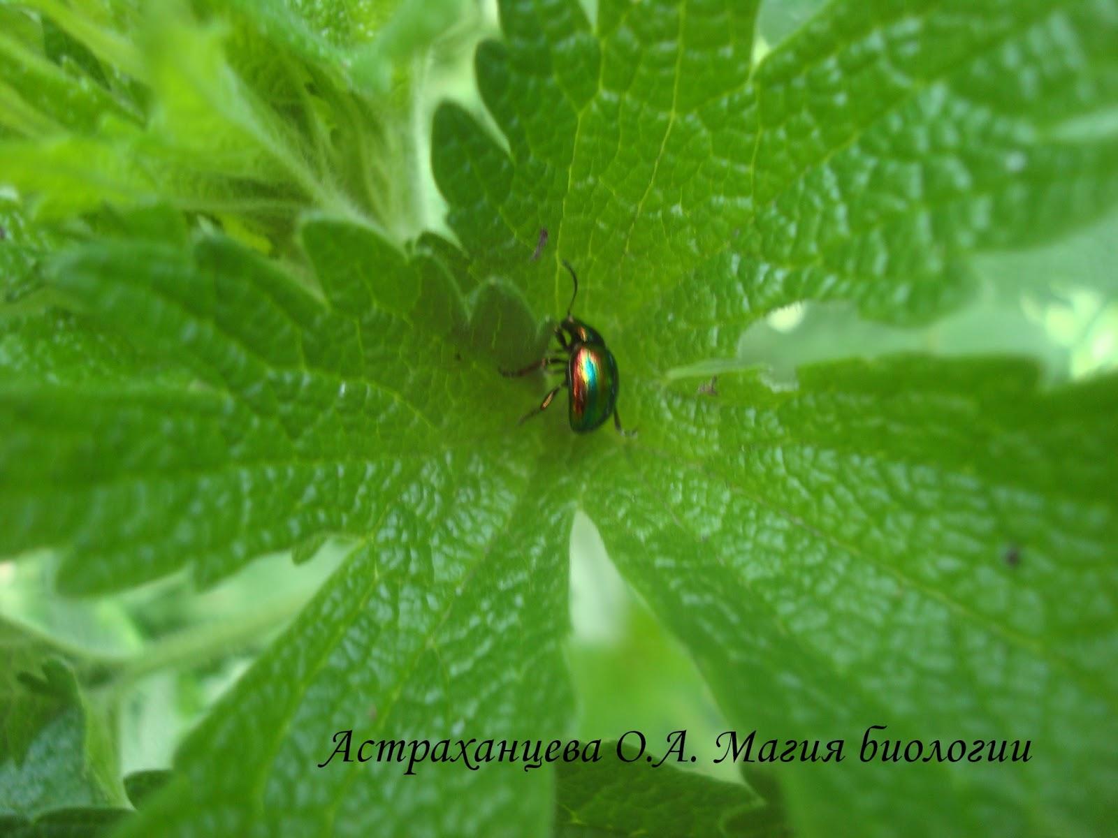 Ротовые органы насекомых Википедия