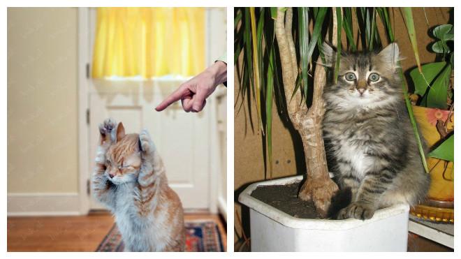 Кот стал писать где попало причины. Почему кастрированный кот метит, почему кастрированный кот начал писать где попало