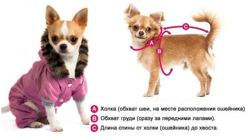 Camiseta estampada para perro con corte cómodo. ¡El patrón más ...