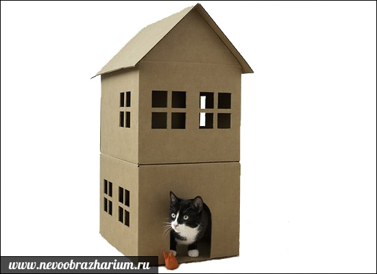 Obrovské kohúty tesný mačička
