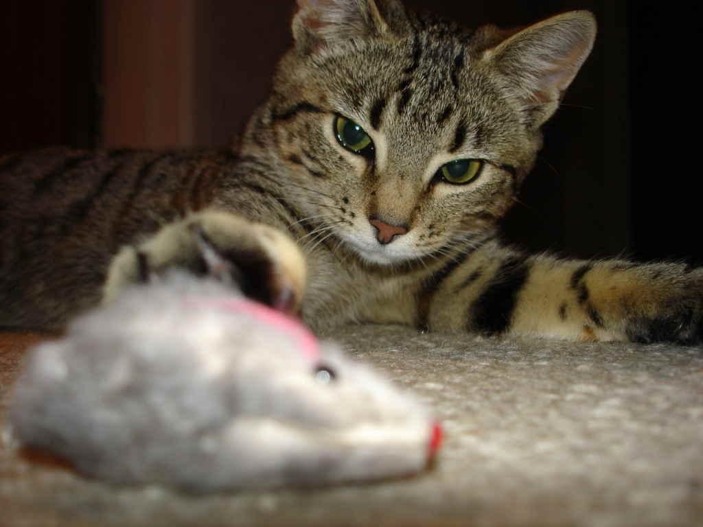 Вакцинация кошек от бешенства необходимость и тонкости процедуры