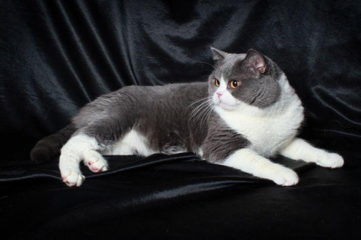 dospievajúci chlpaté mačička videáXX škrečok porno